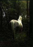 Horse in the woods by Joalita-lady
