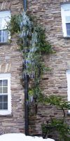 Icicles on Gillette Hall by obsessedsokkafangirl