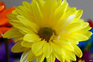 Birthday Flowers 7 by LifeThroughALens84