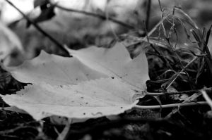 Monochrome Leaf by coffeenoir