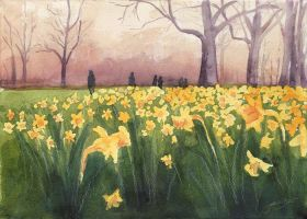 London Daffodils by jackieocean