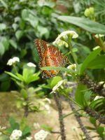 Animals - Butterfly 01 by Stock-gallery