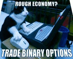 Binary Options Trading Popular With Cat by optionsclickblogart