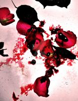 blood on a rose by tazy01