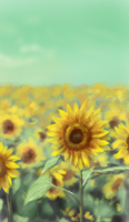 Sunflower by ilovepumpkin2014