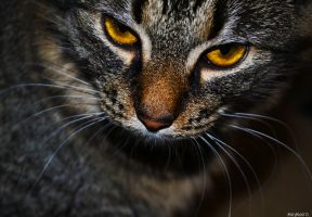 Stare down by ElectraPhenomenon