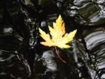 Lone Leaf by zerolover1234