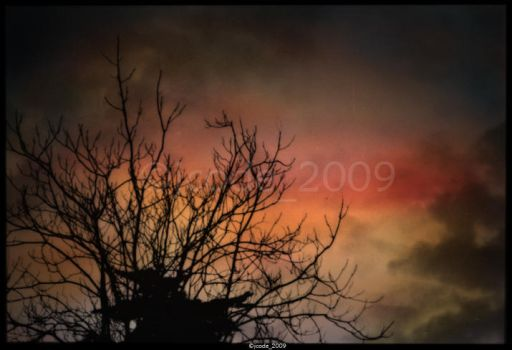 an old tree by jcode