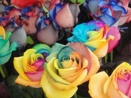 Colourful Roses by SAOstrich
