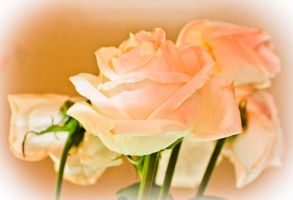 rose 1 by FreedomeSoul88