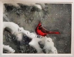 Photoshopped Winter Cardinal by Nightowl103