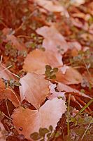 A Trail of Leaves by illumios