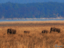 Corbett National Park023. by DebasishPhotos