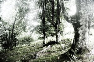 Dark forest by Anupthra
