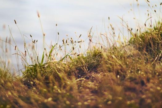 The Grass by Freacore