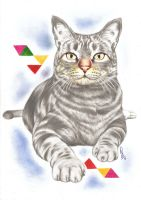 Chico, The Cat by eir-wiscium