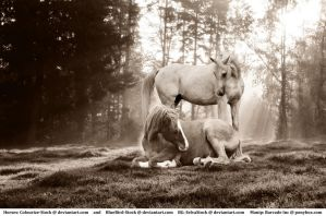 Alive - Horse Manip by HKW1994