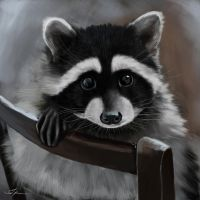 word of the day: raccoon by REDxBeast