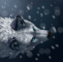 .:Snow:. by Kezzai