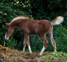 foal stock by linka064