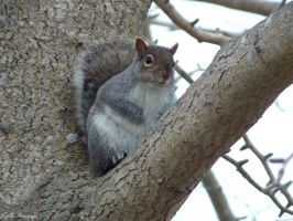 Squirrel by SoulsLastSanctuary
