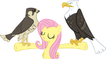 They Are All Quite Regal by flutterguy317