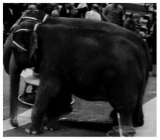 Water For Elephants by LSD-Dreams