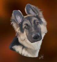 Commission: German Shepherd puppy by TussenSessan