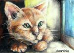 cat in pastel by A-anarchia