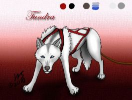 Tundra - Sled Dog Character by WolfScribe