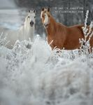 Ponies In The Snow by A-Motive