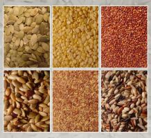 Grains and Seeds by devianb
