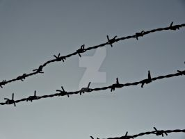 Barbed Wire by SouravLovesNature