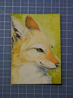 Gift: ACEO for Kebi by wolfgryph