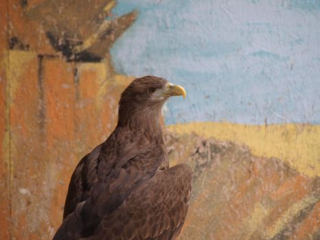 Bird of Prey 16 by pduffill