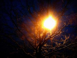 tree and lamp by Mittelfranke