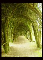 Organic Tunnel by AutumnPhyre