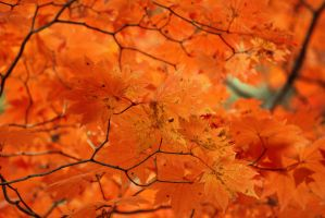Autumn Leaves 5 by firenze-design