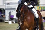 STOCK - Gold Coast Show 329 by fillyrox