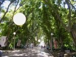 Fig Tree Avenue by ARTmonkey90