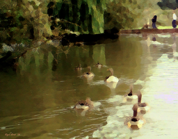 Feeding The Ducks by Nigel-Hirst