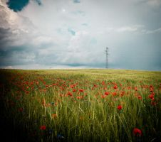 Electrical poppies by wilfriedF