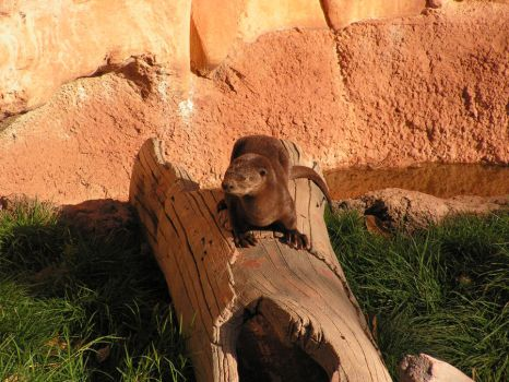 OTTERS by Abilene105