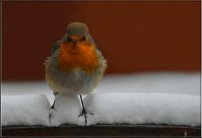 Feeling cold little friend by Lentekriebel