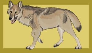 Natural wolf auction 2 - CLOSED by ForeignFrontierRanch