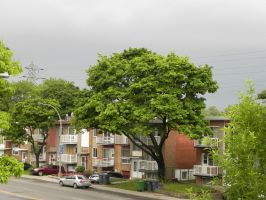 Street View with Tree by philippeL-stock
