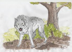 MAD wolf by i-UnKnown