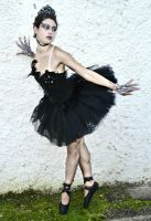 Black Swan by Lady-Ragdoll