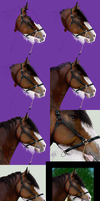 Realistic Horse Practice WIP by Candrence