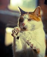 The high five cat by bexa